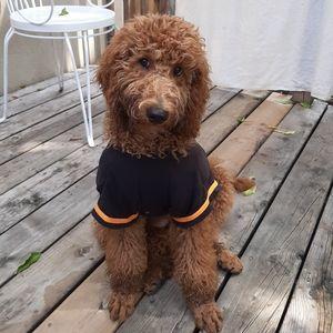 3 for $20 dog shirt